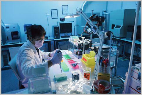 DNA鑑定は綿棒で採取したあとは何をしている?