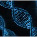 DNA鑑定による科学捜査はどこまで進化する?