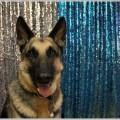 警察犬が所属するのは鑑識課だって知ってた?
