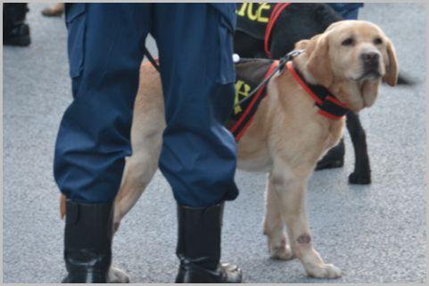 鑑識課には警察犬も所属