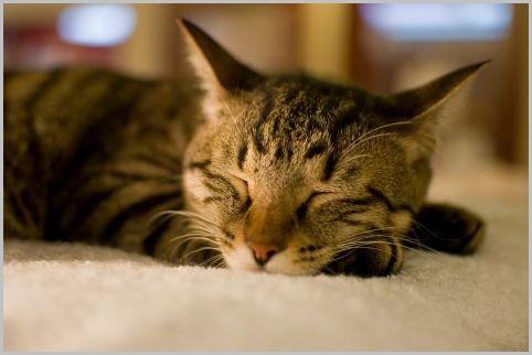 寝具モニターは1晩2万円超の究極の楽なバイト