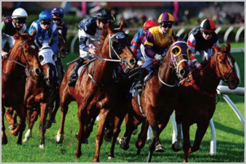 競馬や競輪・競艇で「配当率」が一番高いのは?
